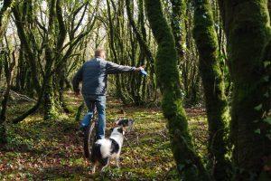 Moosbewachsen und geheimnisvoll - Der Wald bei Locronan