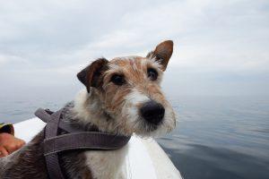 Bootsausflüge sind was Feines. Da erlebt man ne Menge, ohne viel Laufen zu müssen.